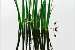 DominiqueTabouret-Reflets