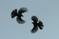 Lecru-Claude-Oiseaux