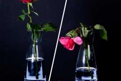 ThierryLortria_Rose